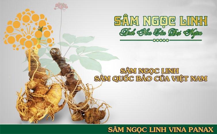 Sâm ngọc linh quốc bảo Việt Nam
